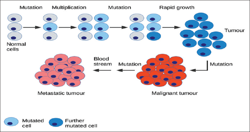 Figure 1: Transformation of normal cells into a tumor (Google)